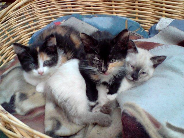 Qui veut adopter un petit chat ? Chatons2009-1