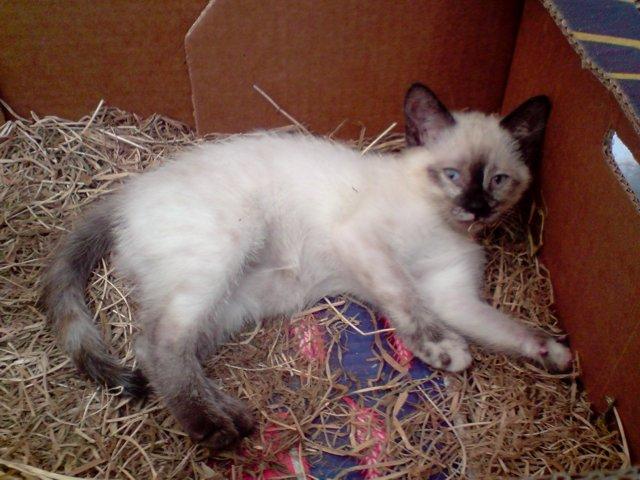 Qui veut adopter un petit chat ? Chatons2009-2
