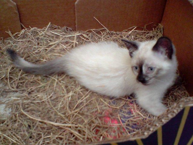 Qui veut adopter un petit chat ? Chatons2009-3
