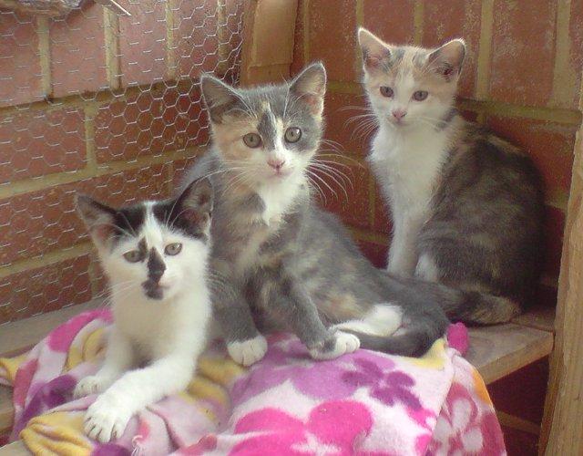 Qui veut adopter un petit chat ? Missouri1