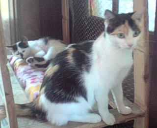 Qui veut adopter un petit chat ? Missouri2